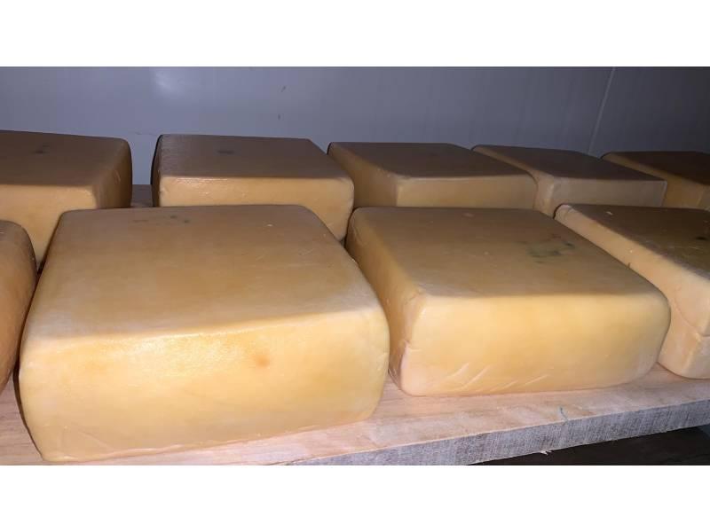 Queso Danbo Artesanal De La Casa x 500 gr